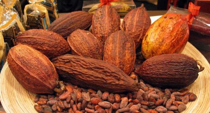 Cocoa fun facts