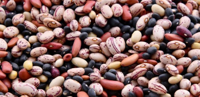 bean fun facts