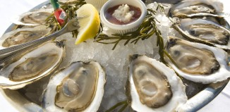 oyster fun facts