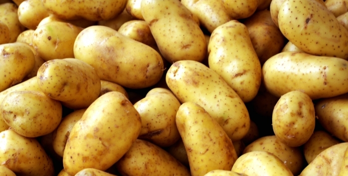 potato fun facts