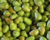 pear fun facts