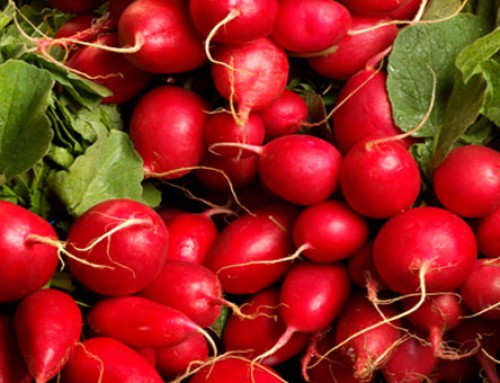 Radish Fun Facts