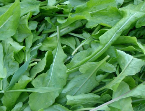 Arugula: A Superfood For Bones On Food Trucks