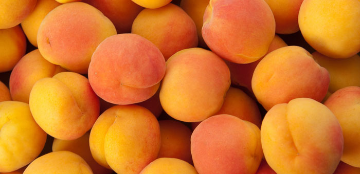 apricot fun facts