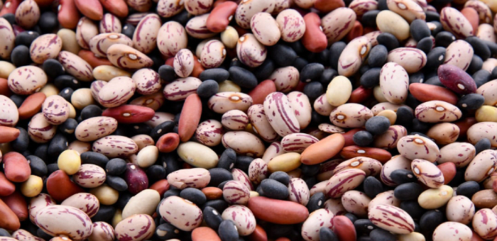 bean fun facts