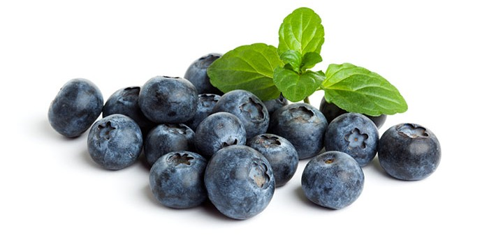 blueberry fun facts