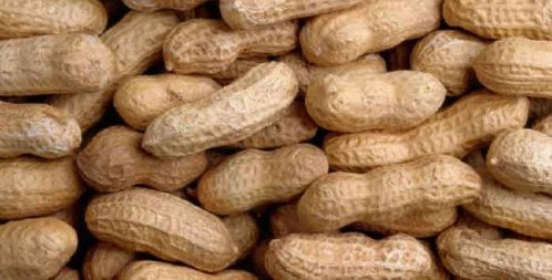 peanut fun facts