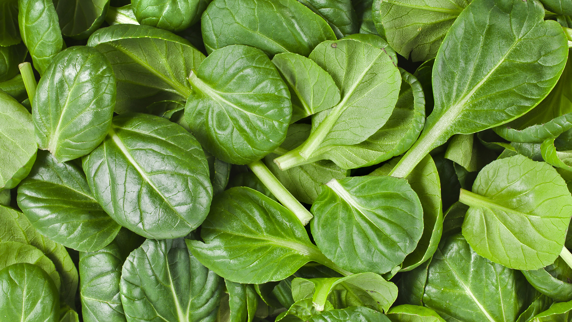 spinach fun facts