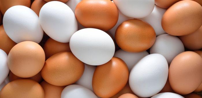 egg fun facts