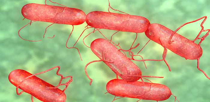 food pathogen