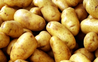 potato fun facts