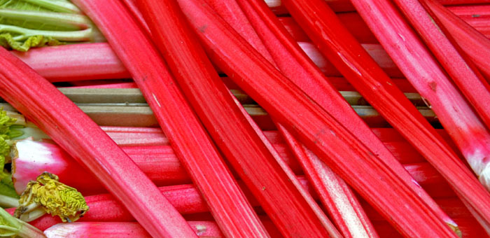 Rhubarb Fun Facts